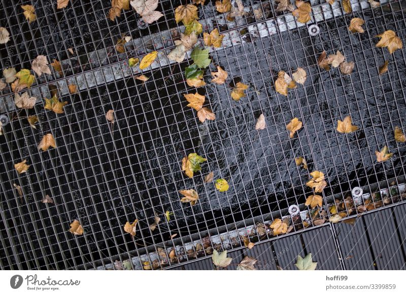 Autumn leaves on the grating Autumnal colours Metal grid Drops of water Puddle flaked Early fall Wet Water Reflection