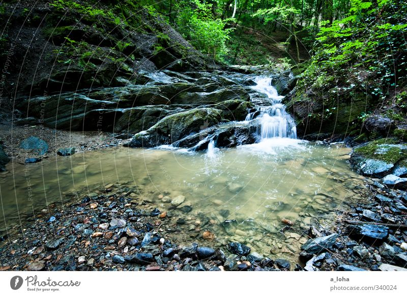 let it flow Environment Nature Plant Elements Earth Water Spring Forest Rock Mountain Canyon River bank Brook Waterfall Stone Esthetic Cold Wet Natural Gray