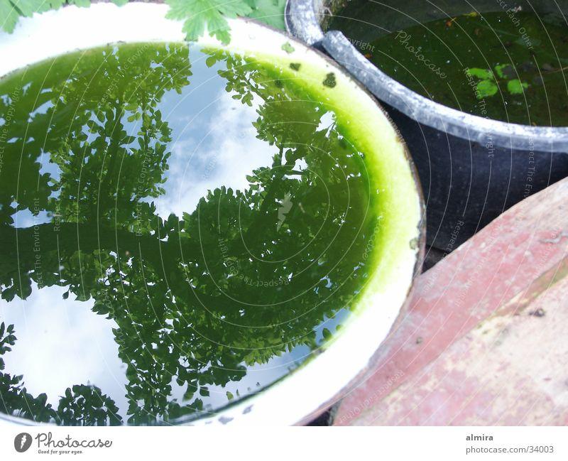 Water Tree Green Plant Garden