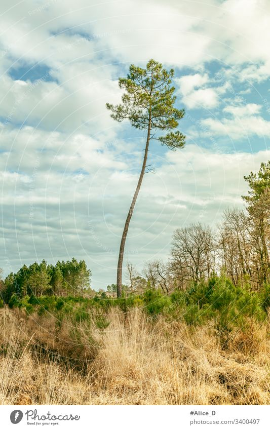 Pine Tree Landscape Nature France abandoned background blue sky branch conifer countryside day dry meadow environment europe forest grass green hill landscape