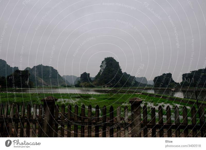 Limestone rock in Ninh Binh in Vietnam green Landscape Nature Gray cloudy Mystic Limestone rocks Asia