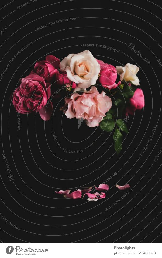 roses - withered - black background Central perspective Contrast Shadow Light Copy Space bottom Copy Space top Deserted Interior shot Subdued colour Romance Old