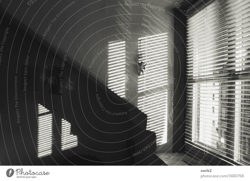 office routine Interior shot inside Sunlight Wall (building) Window Venetian blinds slats Mysterious Dark Contrast Wans Corner Office Decoration Angel Suspended