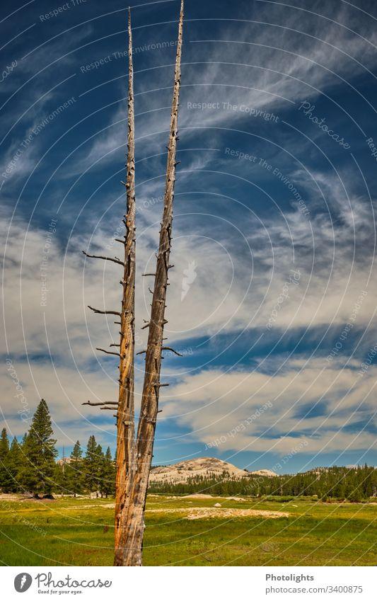 Tioga Pass - Yosemite NP Exterior shot Mountain Blue Beautiful weather Sky Weather Colour Climbing Nature Colour photo USA Yosemite National Park Inspiration
