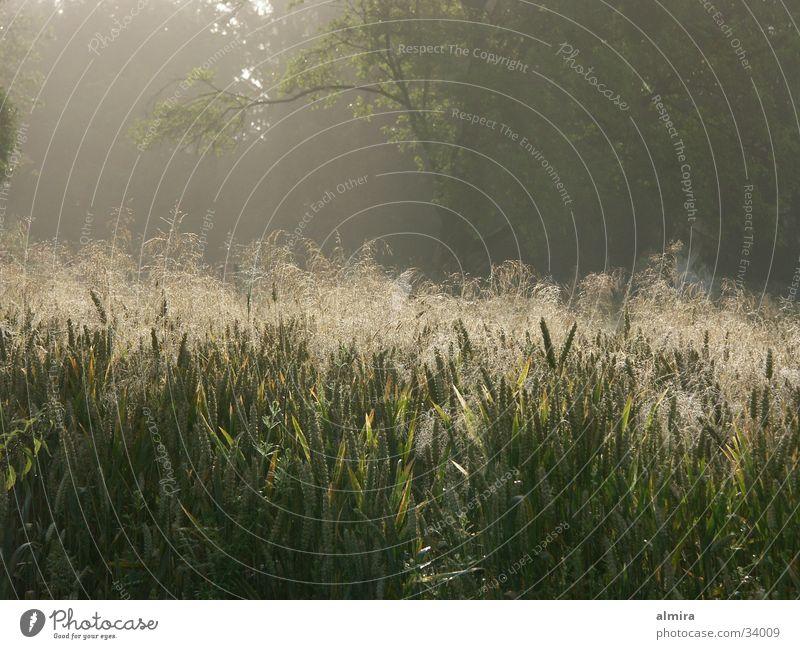 morning light Moody Meadow Back-light Grass Summer Fresh Morning Rope Fog Joy