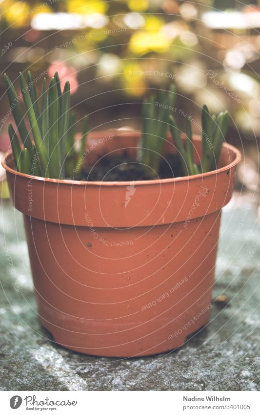Spring is approaching Plant Pot plant Green Colour photo Flower Exterior shot Shallow depth of field Nature Garden Detail Close-up Macro (Extreme close-up) Blur