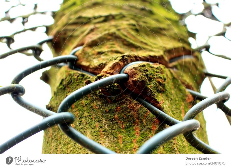 The fence in the tree Tree Tree trunk Tree bark Nature Exterior shot Green Forest Environment Day Colour photo Fence Wood Growth Spring Natural Sunlight