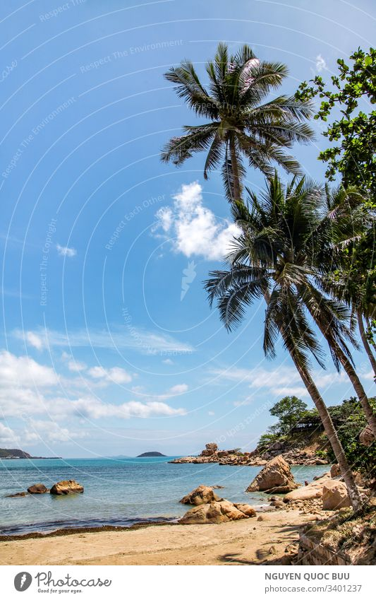 Hon Chong tourist area. A beautiful landscape of Nha Trang- Khanh Hoa - Viet Nam . Look at it with white clouds, against a vast blue sky. A beautiful picture, with tall coconut trees leaning on the romantic golden sand, huge rocks arranged into interesting