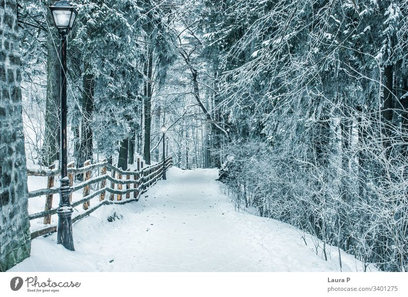 Path in the park in winter, covered with snow path trees frozen beautiful view landscape street lamp no one alone silence quiet