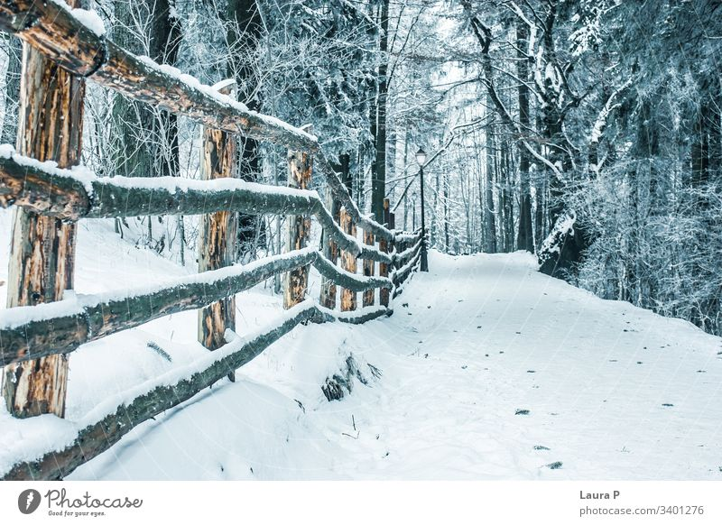 Path in the park in winter, covered with snow path wood wooden fence forest trees beauty beautiful Snow Tree Cold Nature walk no one empty relax quiet