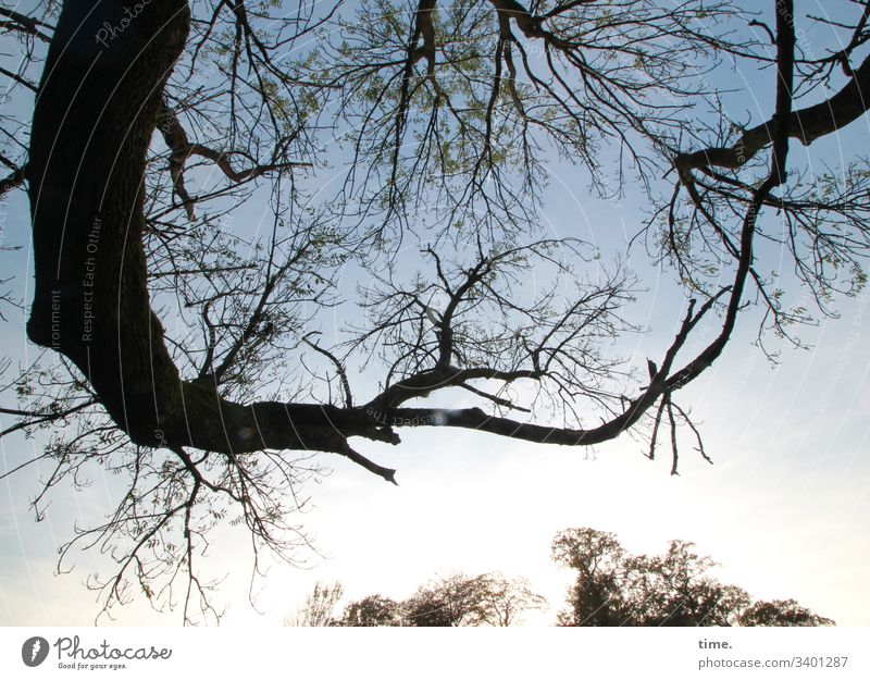 Tree concert Branch Forest tree Twig Sky Whimsical Silhouette Nature Interlocked round Foreground background