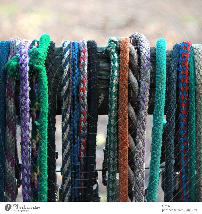Seilschaft | recently at the paddock tapes ropes stripping leash Dew variegated Hang horse industry Plaited textile Plastic Knot Wood Fence Woven functional