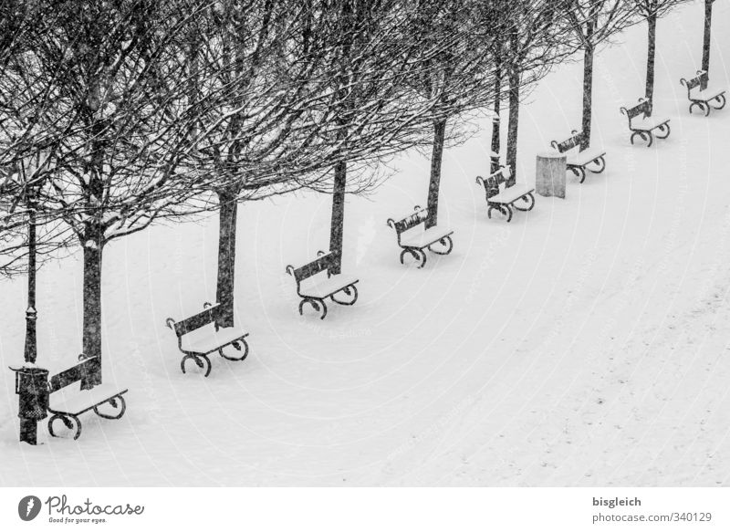Prague Winter Tree Capital city Park Places Black White Snow Cold Bench Black & white photo Exterior shot Deserted Copy Space bottom Day