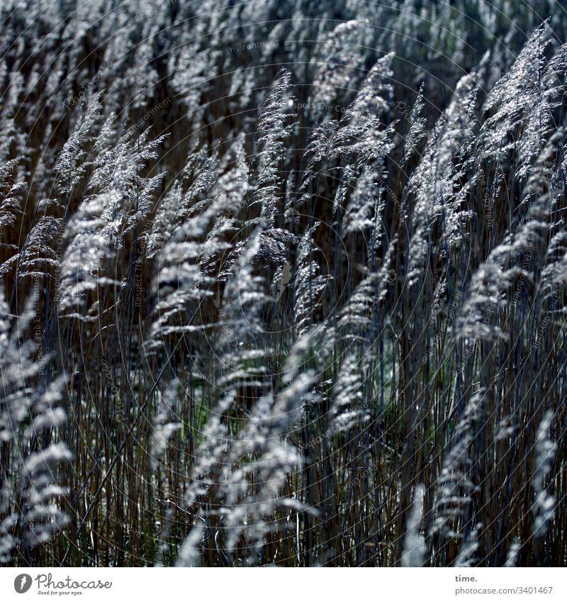 fellowship Grass Coast Baltic Sea wax in common Company Dark Fantasy Movement vivacious Longing Hissing whirr Nature flora Contrast