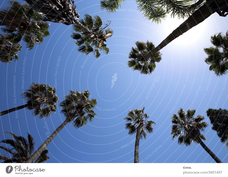 The local palm tree consortium had again spotted two foreign tourists on the ground and demanded emphatically the due environmental surcharge. Sky palms Tall