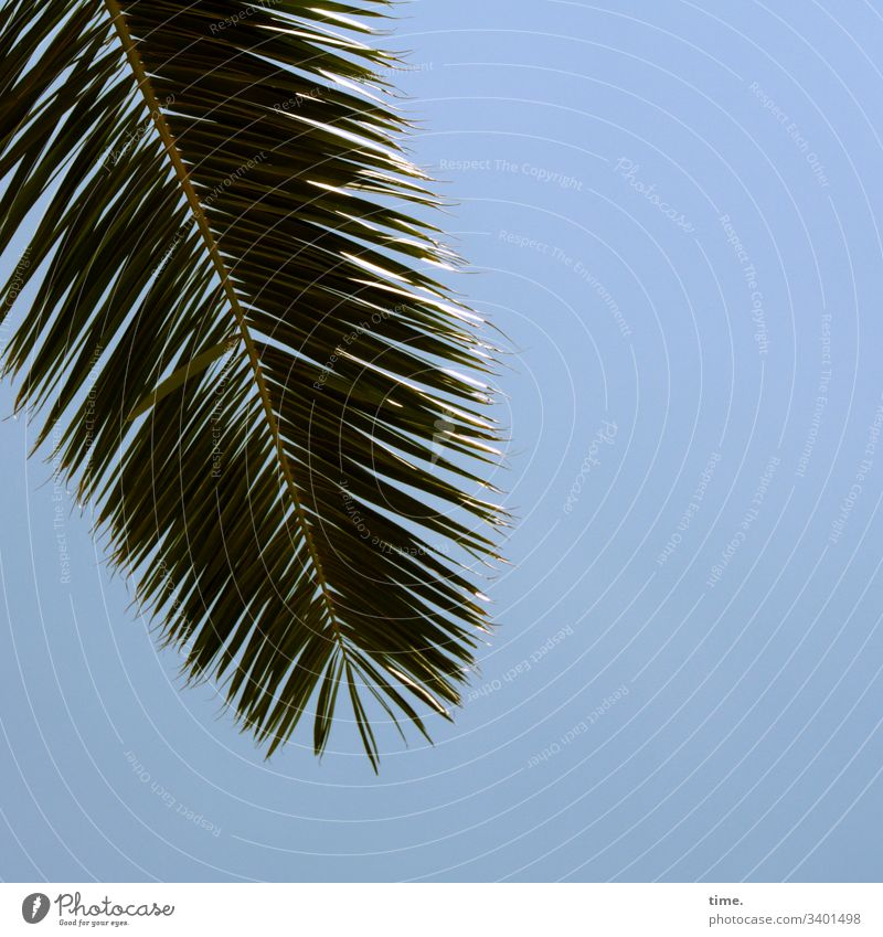 Greetings from above Palm tree detail Surface Blue lines sunny Sky palm leaf sparkle hang Nature Plant Splay Side by side Parallel Shadow