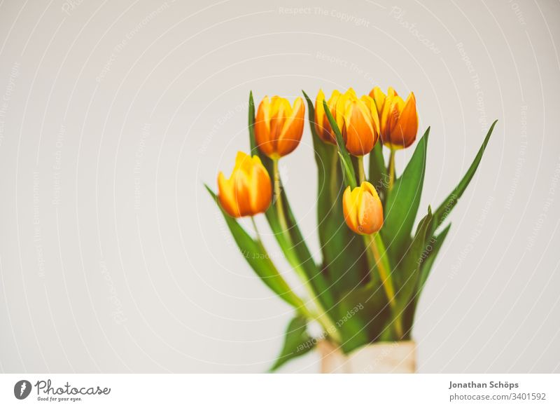beautiful tulips in front of a light background as a gift for Mother's Day heyday flower decoration Tulip Beautiful Beauty and beauty Blossom Bouquet Bright