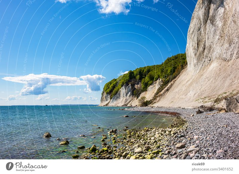 Chalk cliffs on the island of Rügen. Coast Baltic Sea Limestone rock Baltic coast trees steep coast Ocean Sky Clouds Blue Mecklenburg-Western Pomerania