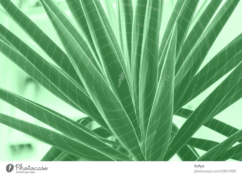 Succulent plant in the city. Mint green color nature summer spring design light green 2020 trend trendy mint mentol springtime modern neo green green mint