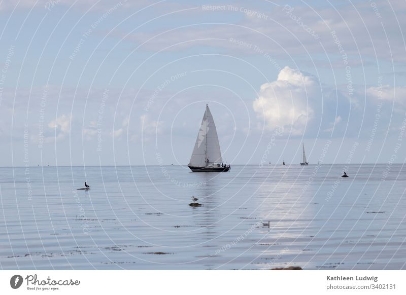 A sailing ship on the Baltic Sea off the island of Poel. boat Sailing ship Sailboat ocean Ocean gulls birds Nature Water blue sea