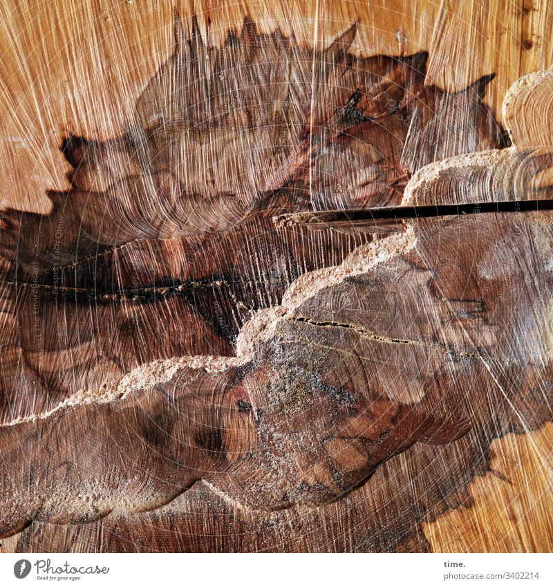 Interface Wood sawn timber Tree Tree trunk Forest mark Lie Nature Forestry marked Fresh Round Cut cutlery cut pattern notch sawdust decay cutting marks