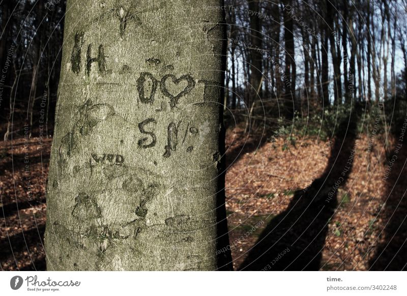 Tree & Message bark Tree trunk mark Orientation Clue Beech tree in the wood antagonism communication vegetation Ethnic Puzzle colors In transit hiking trail