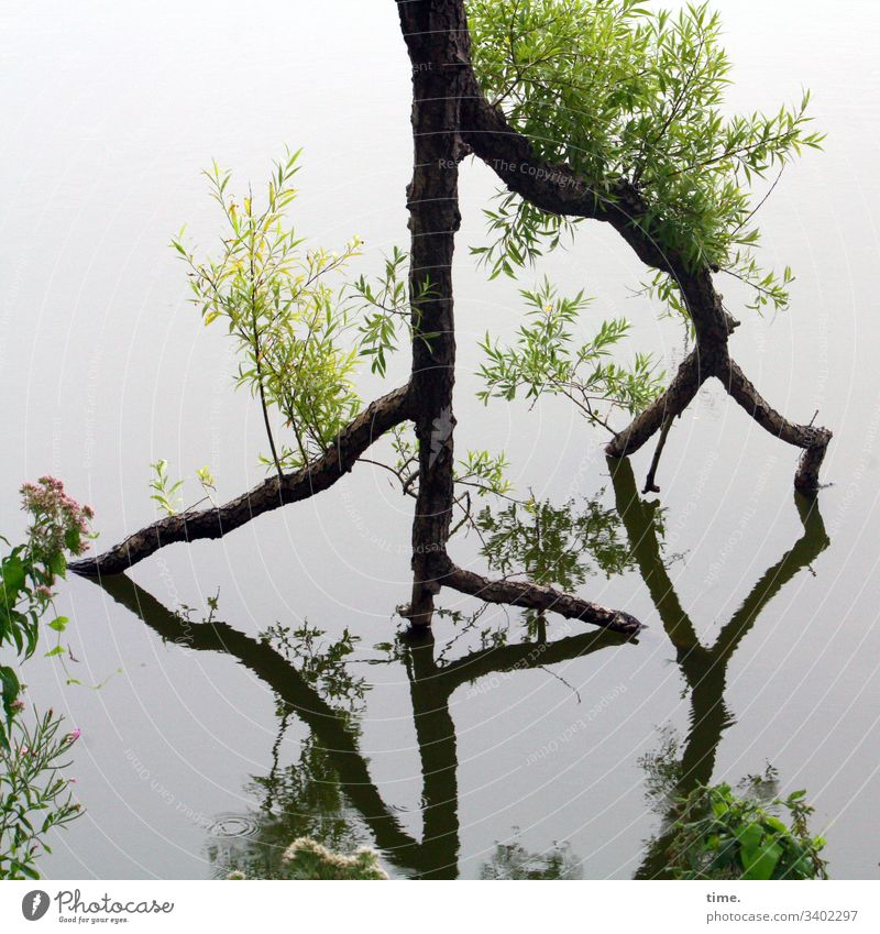 Life goes on tree Water reflection drift Force Nature New Growth Crazy resistance Disagreement Creativity creatively Damp Survive Fresh youthful Lake