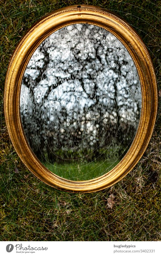 Golden Mirror lies on a foundation of moss. Drops of water run over the mirror. A gnarled hedge is reflected. Mirror image reflection Grass Moss golden