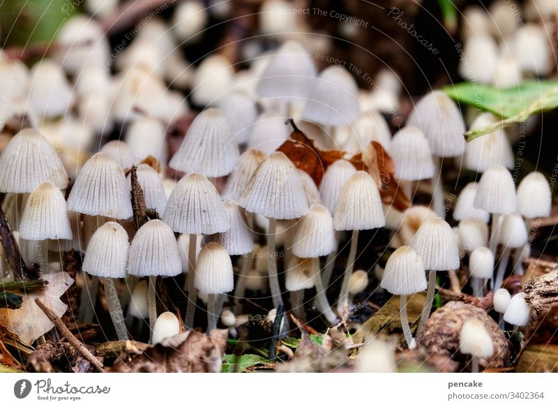 just don't push, everyone will get their turn | corona thoughts mushrooms Many quantity Forest mass event jostling proximity Small Macro (Extreme close-up)