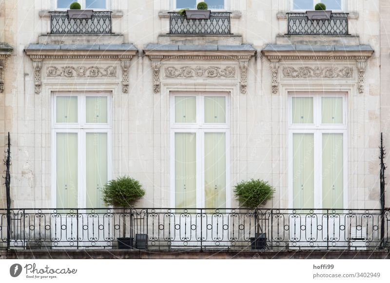 elegant old building balcony with two box trees Window Shutter Row Quarrystone facade Wall (barrier) Wall (building) arched window Central perspective plants