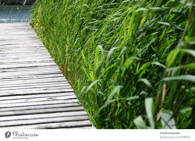 Water Ocean Green Blue Grass Wood Lake Sand Coast Footbridge Polished section