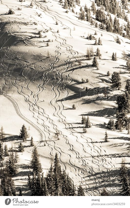 Wavy ski tracks in fresh snow through freshly snowed-in landscape. Winter Skiing Tracks crimped snow skiing Winter magic Gorgeous Winter sports Alps