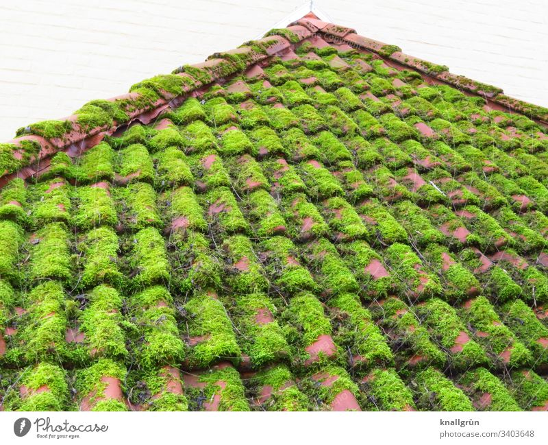 red tiled roof thickly overgrown with moss Moss Roof Roofing tile Overgrown House (Residential Structure) Lichen Exterior shot Colour photo Deserted Day Plant