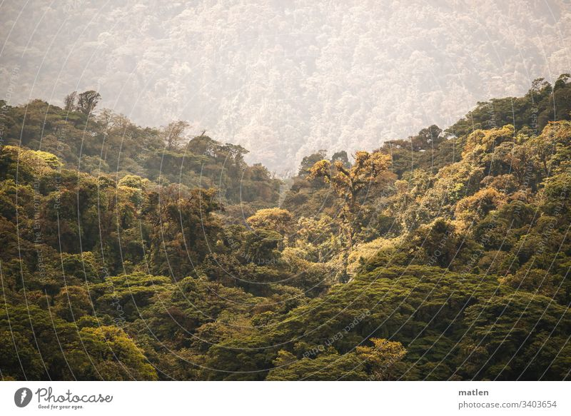 rainforest Fog Tree sunshine Green Brown Gray Horizon Monteverde NP Climate Climate change
