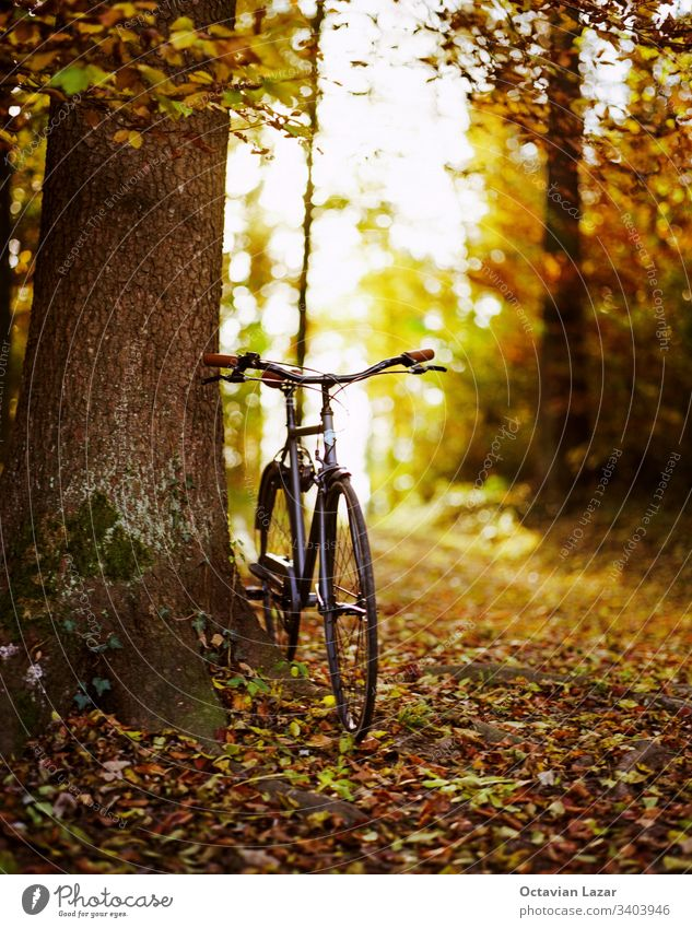 Classic bicycle in the forest in autumn back light from the setting Sun idyllic scene shallow depth of field nobody background beautiful beauty bike bright