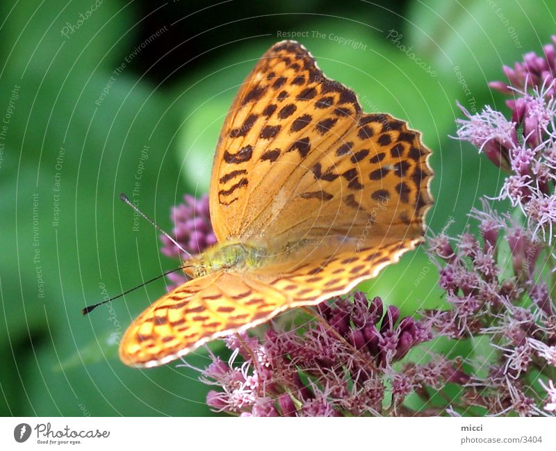 Butterfly yellow Insect Transport yellow butterfly Wing Nature Plant