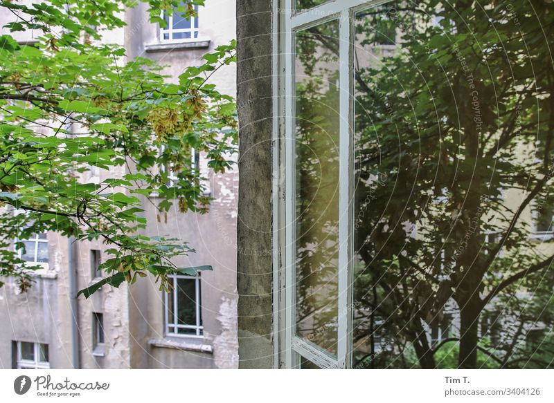 Window to the courtyard Backyard House (Residential Structure) Tree Wall (building) Facade Old building Living or residing Apartment Building Deserted Downtown