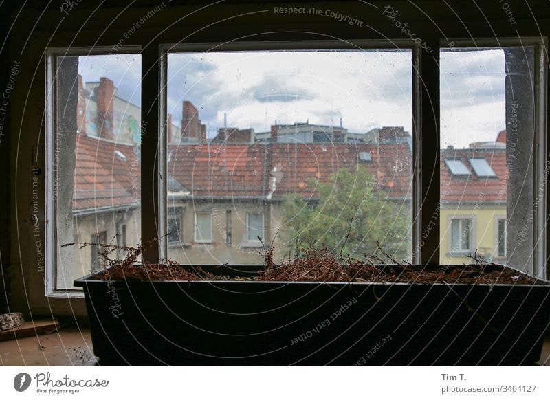 courtyard windows Window Backyard Architecture House (Residential Structure) Colour photo Day Town Deserted Manmade structures Old town Prenzlauer Berg Berlin