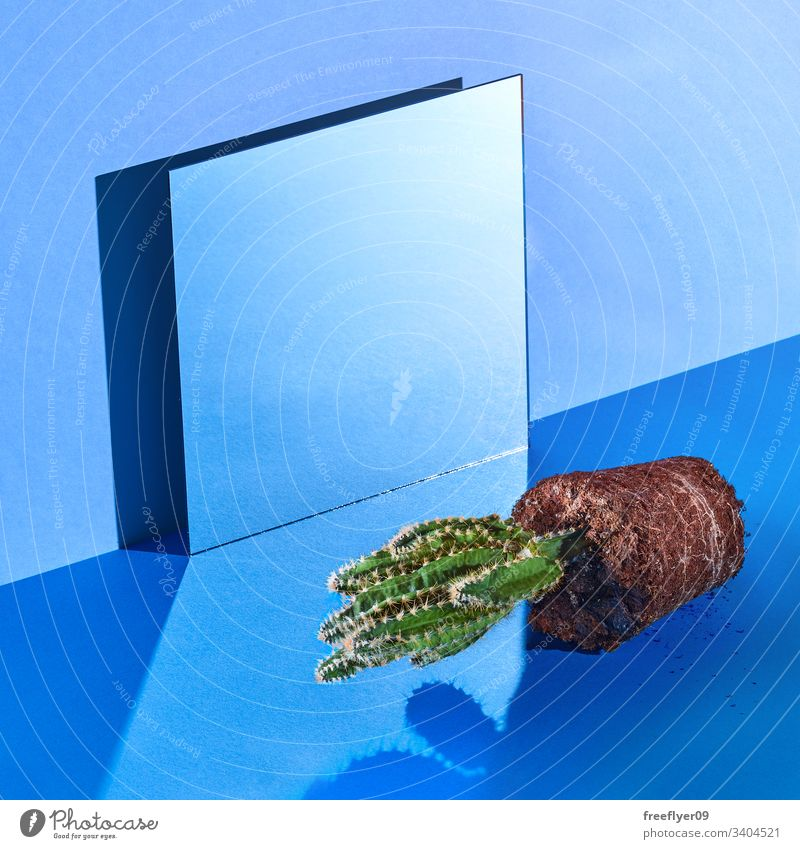 Still life space with a mirror and a cactus out of its pot blue still still life hard light wall square squareformat cold empty no one noone object objects