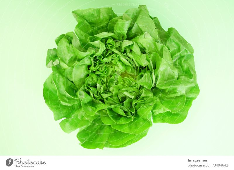 Green lettuce - green background. Lettuce for salad. cut out Fresh Leaf Eating no people Healthy Eating Vegetable food and drink organic Raw vegetables