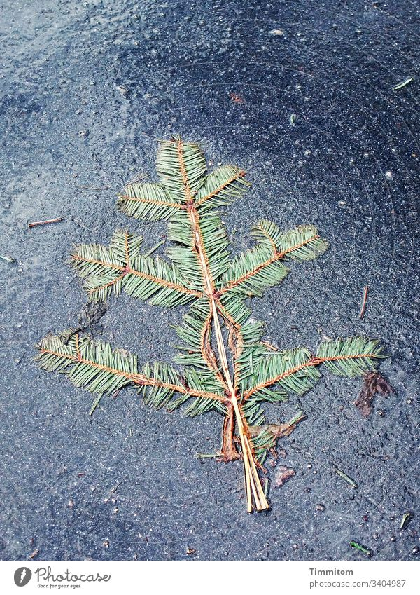 A flattened branch Twig Level Coniferous trees Symmetry Street Asphalt Wet Exterior shot Colour photo Deserted Green Plant Fir needle