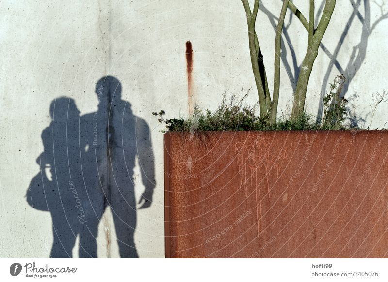 Shadow on the wall - couple with tree Couple Friends Affection Love Lovers empathy Forever Young Relationship Infatuation Related Happy Harmonious In pairs Man