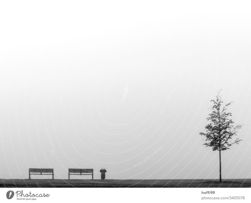 Still life with bench garbage can tree and fog Bench rubbish bin waste bins Tree young tree Fog Bad weather Gloomy Exterior shot Loneliness Fatigue Stagnating