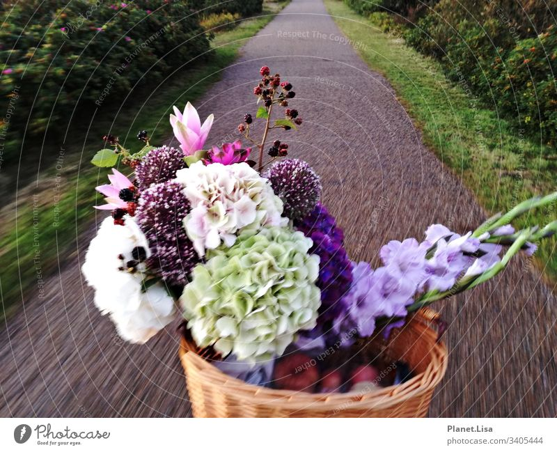 on the way by bicycle Street Bouquet Hydrangeas Exterior shot Colour photo Flower Plant Nature Fragrance Multicoloured Movement Blossom Blossoming Deserted Pink
