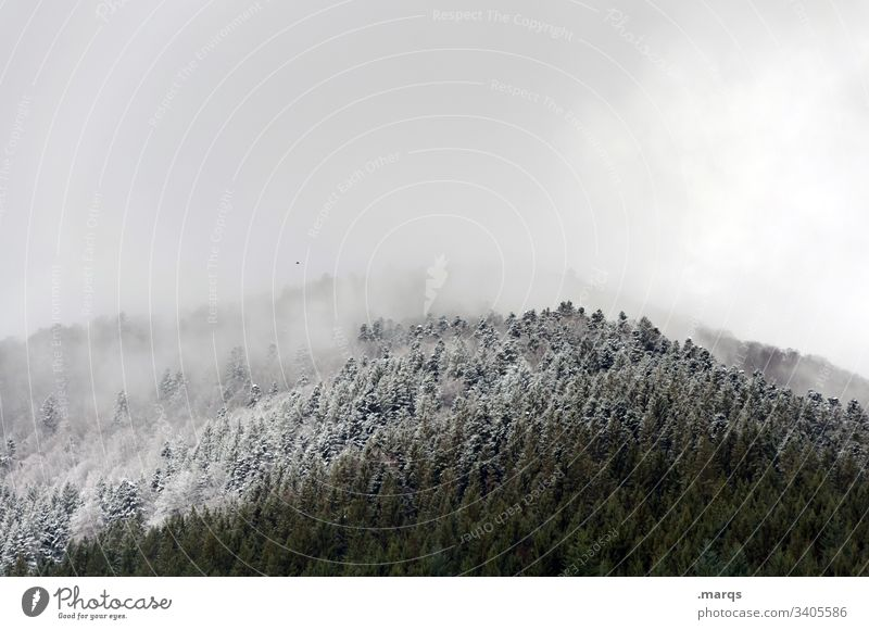 snow line Winter Snow Tree Forest Cold Snowfall limit Winter vacation Ice Frost Weather Climate Environment Nature Landscape Clouds Coniferous trees