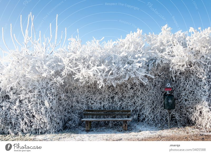 Freezing bench Snow Winter Bench Calm Peaceful Relaxation Nature Landscape Ice Frost chill Climate Environment Freeze bush Hedge Blue sky Beautiful weather