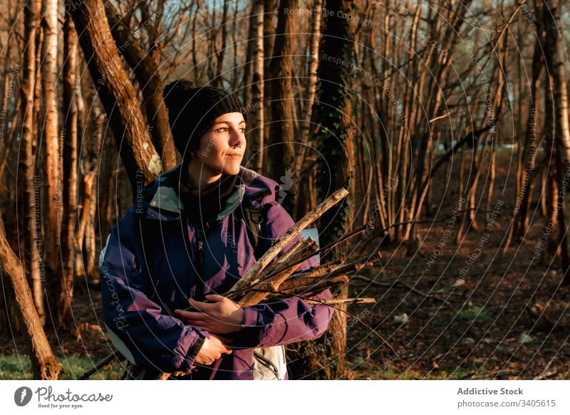 Cheerful young female traveler with firewood in forest woman hiker collect camping autumn nature journey idyllic environment destination gather pick expedition