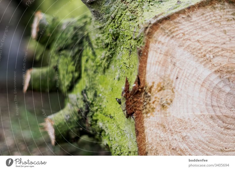 annual rings Tree trunk Annual ring Wood Tree bark Colour photo cut down tree Nature