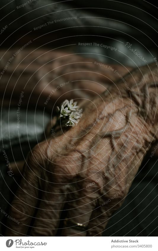 Crop elderly person with tiny flower wrinkle life tender vein bloom hand fresh natural plant care aged senior old retire mature dark peaceful blossom calm