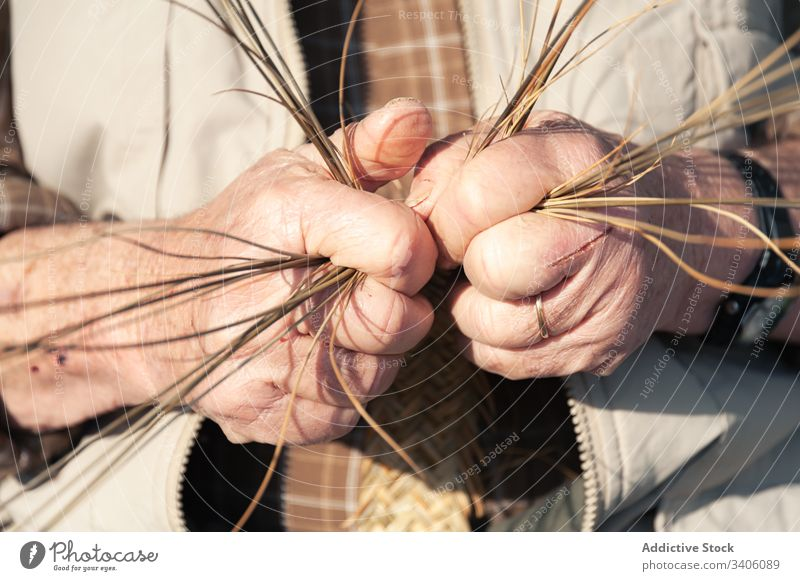 Crop elderly craftsman creating wicker natural material braid organic rustic bunch artisan senior rural detail dry industry design occupation professional